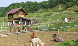 社会福祉法人デンマーク牧場福祉会